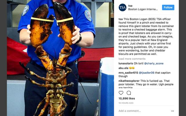 Не волнуйтесь: гигантские живые омары официально разрешены в качестве ручной клади