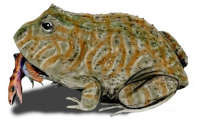 この巨大な先史時代のカエルの噛みつきは非常に強力だったので、恐竜を狩ることができました