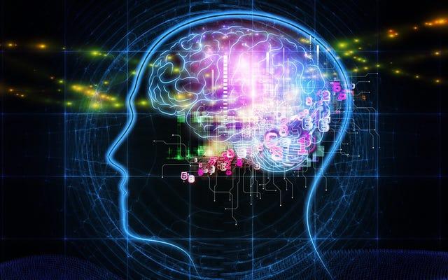 वे मस्तिष्क प्रत्यारोपण के साथ मानव स्मृति को बढ़ाने के लिए पहली बार प्रबंधन करते हैं