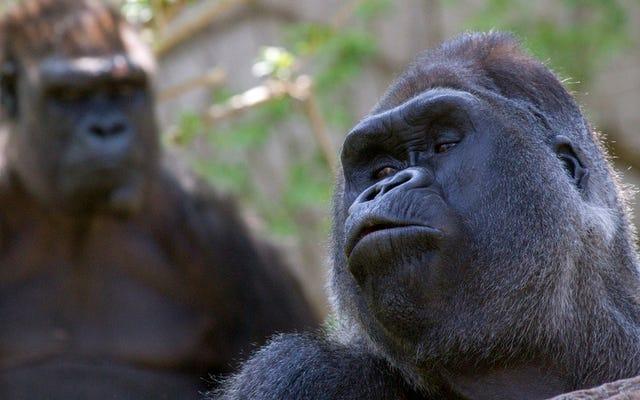 Los zoológicos apestan tanto para los animales como para los humanos