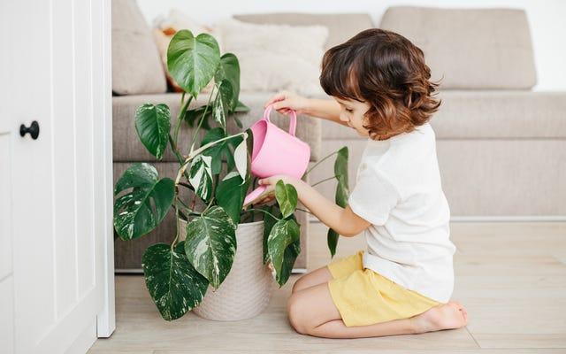 Çocuğunuzun Neden Bir Bitkiye İhtiyacı Var?