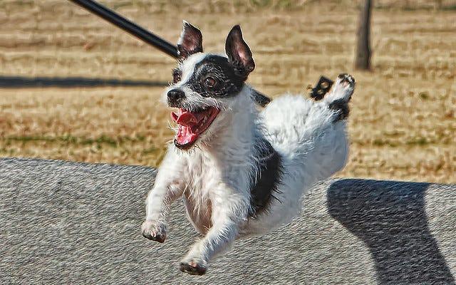 Bảo hiểm sức khỏe cho thú cưng có thể tạo cảm giác cho một chú chó năng động
