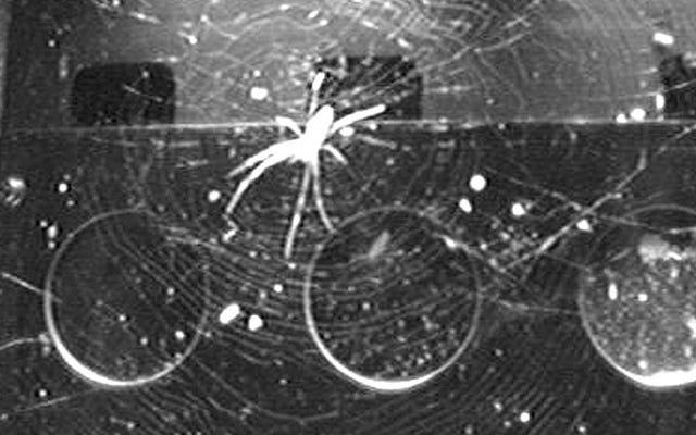 Spinnen der Raumstation haben einen Hack gefunden, um Netze ohne Schwerkraft aufzubauen