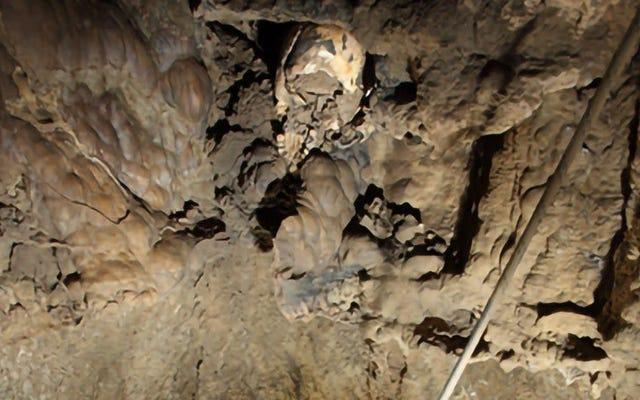 この古代のデフレッシュドの人間の頭蓋骨がどのようにしてそのような奇妙な場所にたどり着いたのか