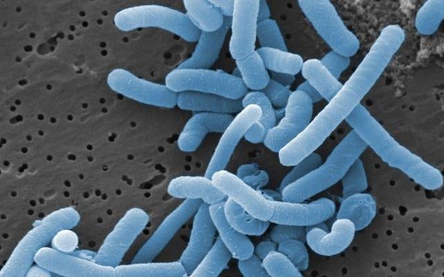 Nghiên cứu bản đồ hàng trăm vi khuẩn sống trong âm đạo của con người