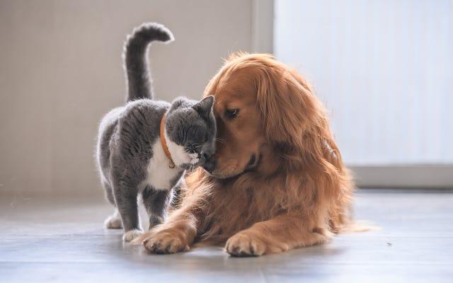 ラストコール:私たちは皆、感情的なサポート動物ではありませんか?