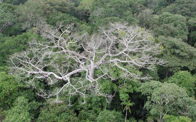 干ばつがあなたの木を殺そうとしているかどうかを見分ける方法