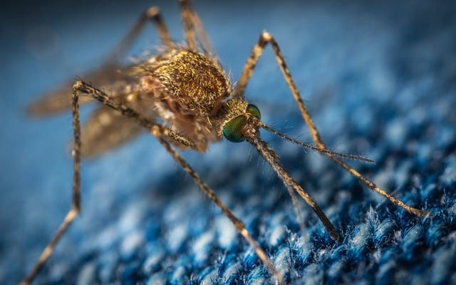 कैसे खोजने के लिए और अपने कमरे में चारों ओर एक ही मच्छर मार डालो