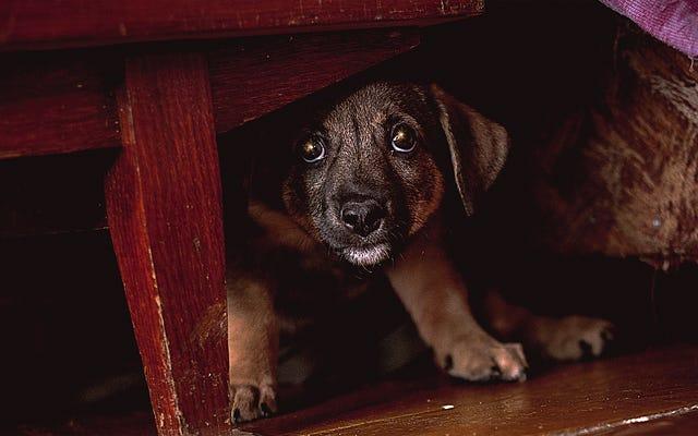 आतिशबाज़ी से डर गया कुत्ता