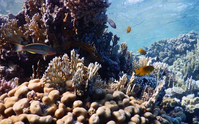 劣化した石油タンカーが紅海を脅かす、科学者たちは警告する