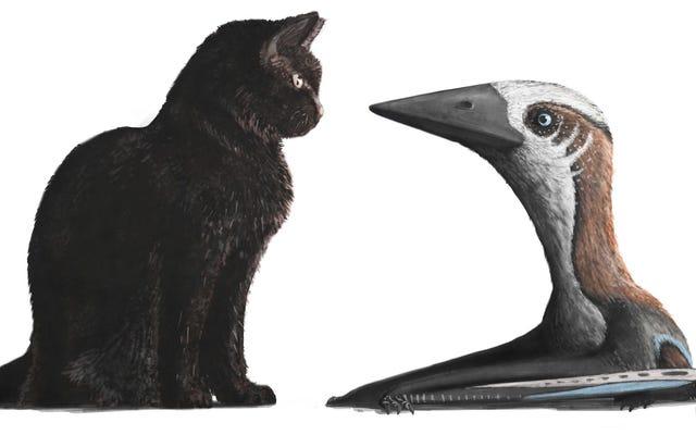 彼らは猫の大きさの愛らしい新種の翼竜の残骸を見つけます