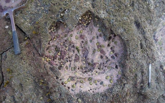 Trove tuyệt đẹp của kỷ Jura Dấu chân Dino được phát hiện ở Scotland