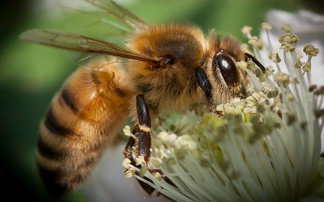 นักวิทยาศาสตร์แมลงสควอชกระดาษ 'Insect Apocalypse'