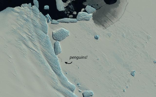 衛星画像は、南極の融解における新しいペンギンのコロニーを明らかにします