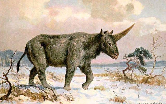 これはおそらくユニコーンの神話を生み出した動物です