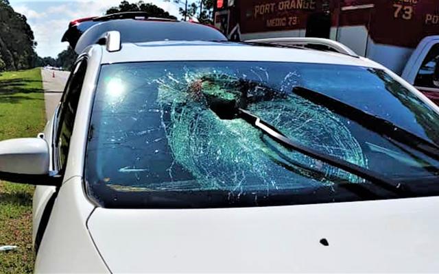 カメは無防備な運転手のフロントガラスを通って飛んでいきます