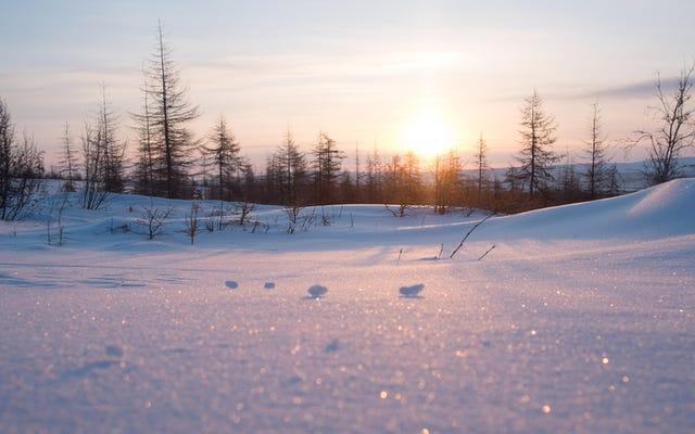 時間を忘れた家族:シベリアの森で人間との接触がない40年