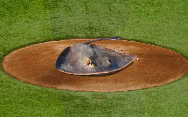 แทมปาเบย์มอบรางวัลการแข่งขันครั้งแรกของเกมระดับโลกให้กับปลากระเบนที่คร่าชีวิตสตีฟเออร์วิน