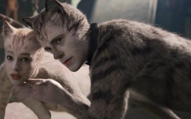 参加する、インターネット:一部のマゾヒストにチャリティーのために24時間連続で猫を見るように強制する
