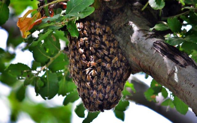 La science prouve que nos ancêtres préhistoriques étaient en effervescence pour le miel