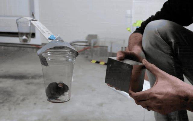 このネオディミウム磁石は非常に強力なので、マウスを動かすことができます
