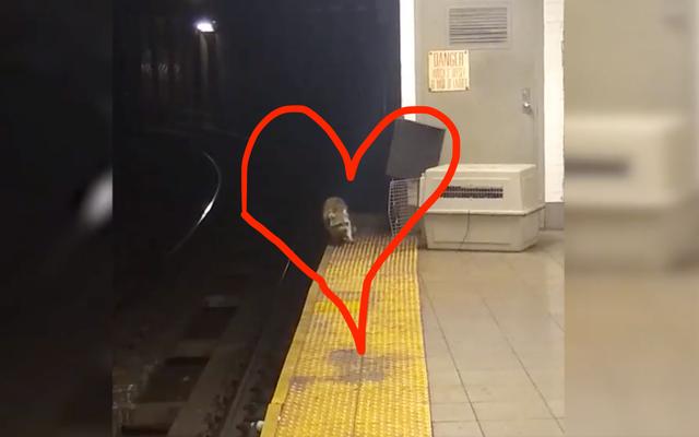 私の冬のときめきは地下鉄のアライグマです