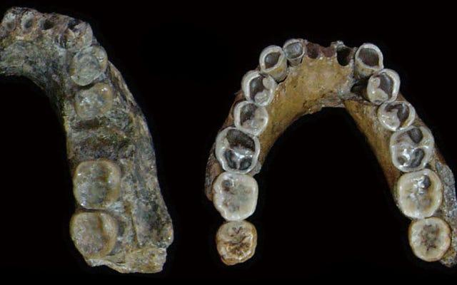 Spesies Manusia Yang Punah Mungkin Tidak Berevolusi di Asia Lagi pula, Penelitian Baru Menyarankan