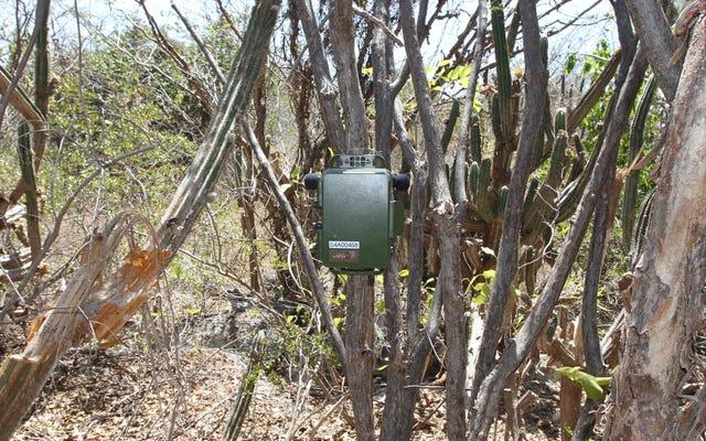 ハリケーンマリアの間にプエルトリコの野生生物の忘れられない音を聞く