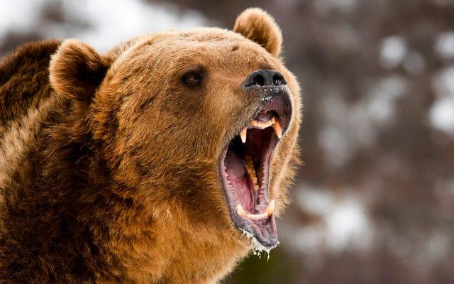 今週は空腹のクマで