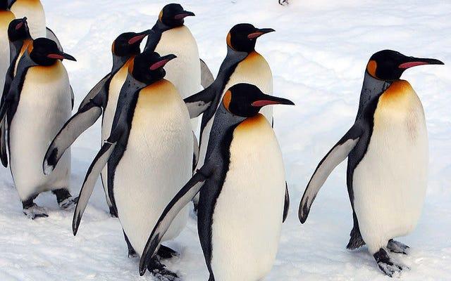 これらのゲイペンギンは、養子縁組がうまくいかない場合に訴える必要があります