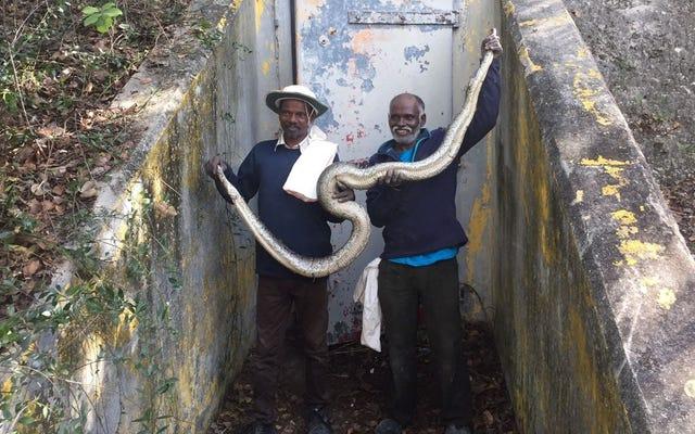 Florida mempekerjakan dua pemburu dari suku Indian untuk mengakhiri wabah ularnya