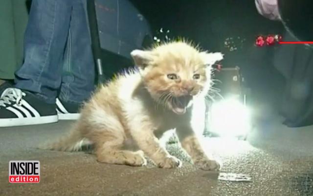 यह पार्किंग लॉट बिल्ली का बच्चा बचाव मानवता के बारे में बेहतर महसूस कराएगा