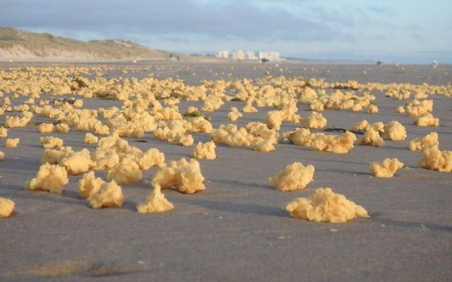 フランスの海岸で起きているこのスポンジの形をしたたわごとが一体何なのか誰も知らない