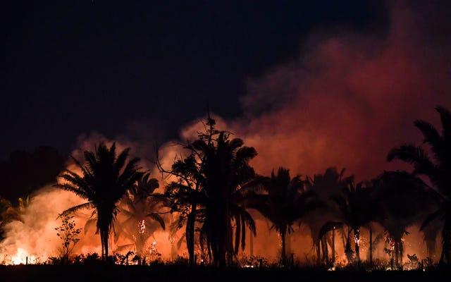 Экосистемы размером с тропический лес Амазонки могут разрушиться в течение десятилетий