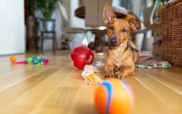 犬のおもちゃに関するフィードバックを提供するために500ドルを取得