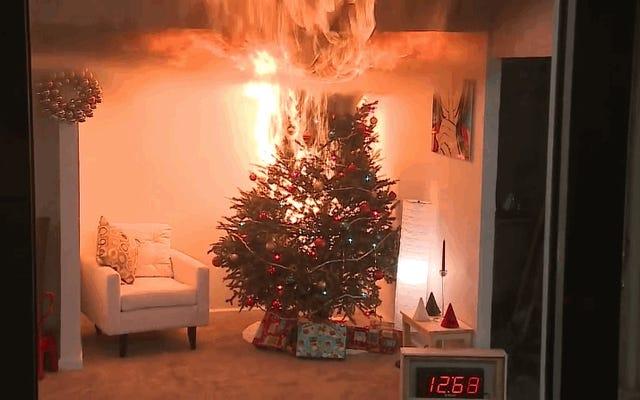 Alasan sebenarnya mengapa menyiram pohon Natal Anda setiap hari dapat menyelamatkan hidup Anda