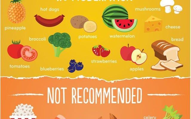 อาหารทั่วไปที่สุนัขกินได้และกินไม่ได้