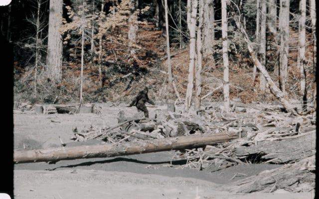 Les cheveux attribués au mythique Yeti sont en fait un ours brun