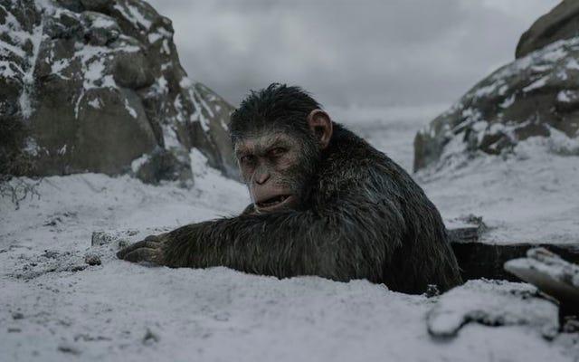 Christopher Nolan dan kera berperang, ditambah 20 film lainnya yang akan tayang Juli ini