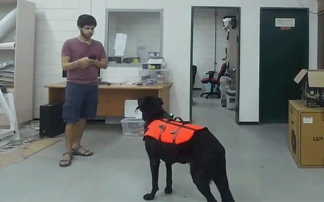 I cani telecomandati sono ora una realtà grazie a questo giubbotto tattile