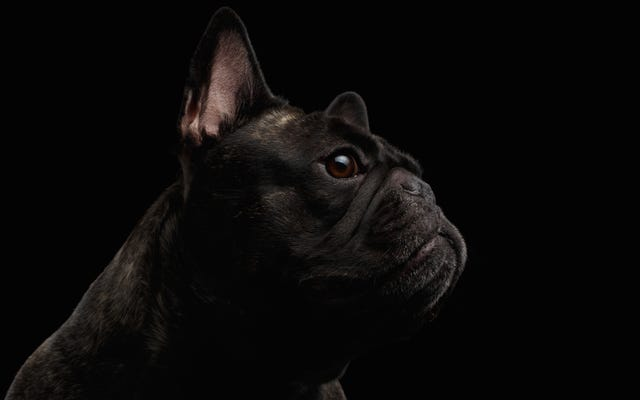 ロシア人が2つの頭を持つ犬を作り、死からよみがえらせた日