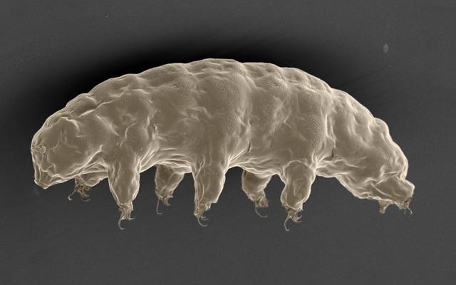 Các nhà khoa học cho biết Tardigrades sẽ là động vật cuối cùng trên trái đất