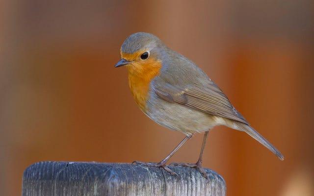 研究者は、鳥が地球の磁場を「見る」ことを可能にするものを発見します