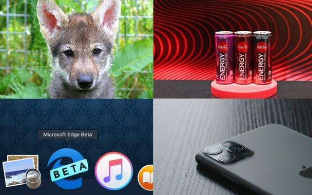 Wolf Puppies, Coke Energy y el último vestigio de Internet Explorer: las mejores historias de Gizmodo de la semana