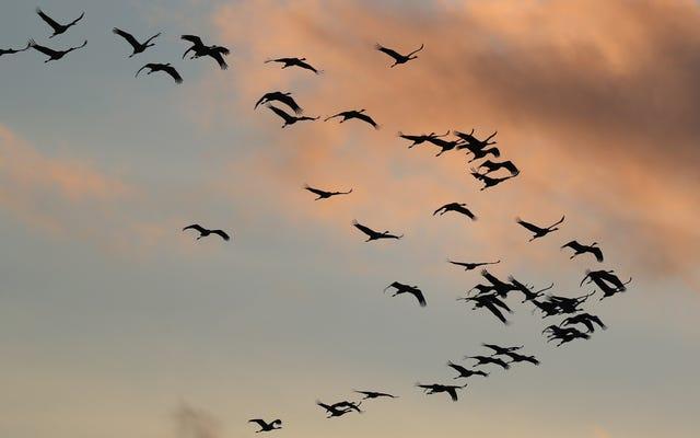 気候変動は今空中で鳥を殺している