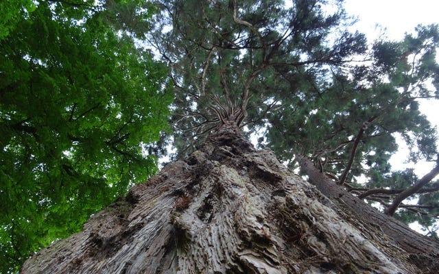 ต้นไม้ช่างน่าอัศจรรย์กว่าที่เราคิด