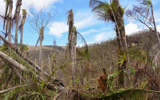 3,000万本の枯れ木と枯れ木がプエルトリコの森林をどのように再形成しているか