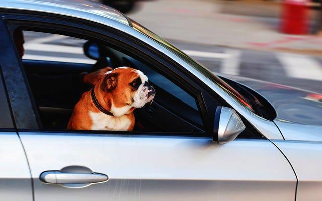 夏に子供や犬を車の中に置いたままにしない理由:彼らはたった1時間で死ぬことができます