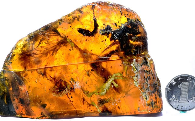 Bilim Adamları Amber'de Sıkışmış 100 Milyon Yaşındaki Neredeyse Tamamlanmış Yavru Kuş Buldu