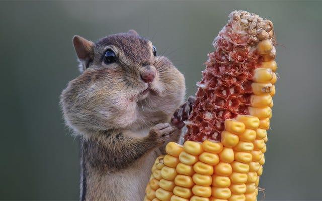 おかしな自然写真コンテストのファイナリストであなたの一日を明るくしてください